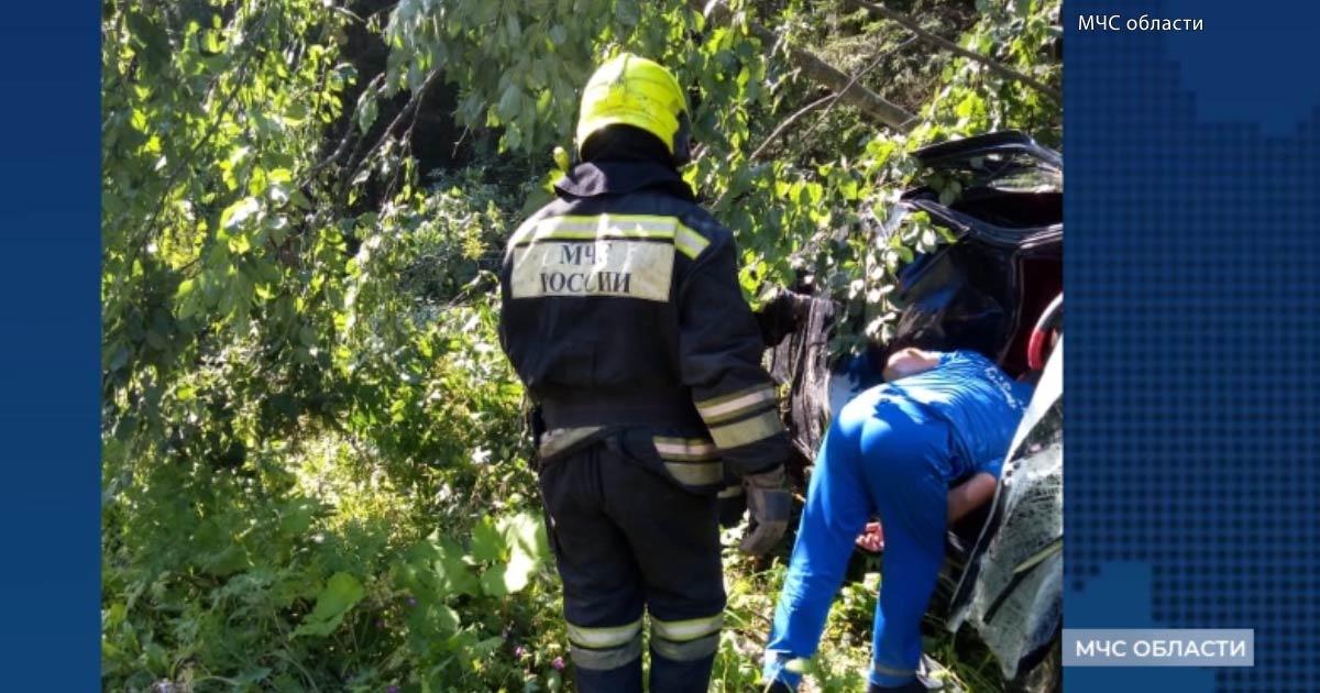 """В Александровском районе водитель """"Мерседеса"""" сбил лося, который выбежал на дорогу"""